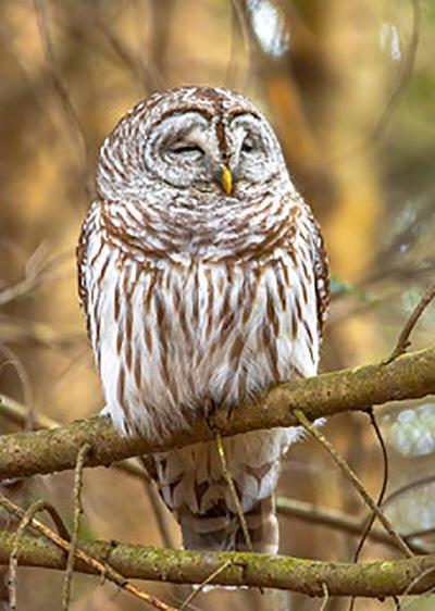 Audubon owl program