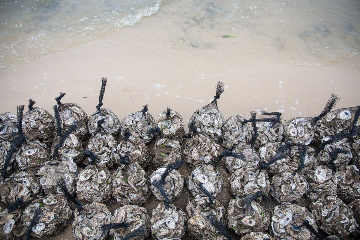Oyster Recycling at Goose Island State Park