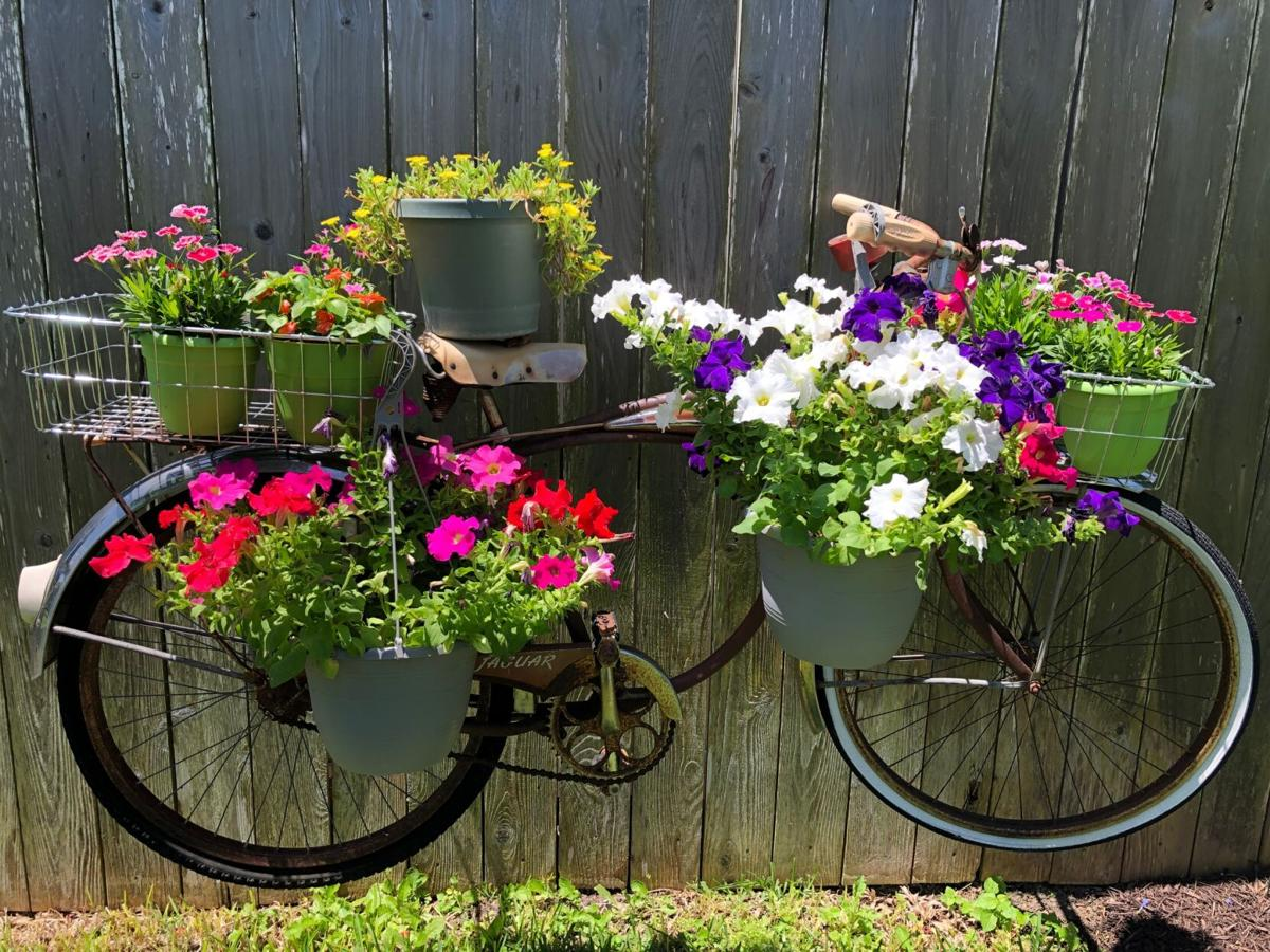 Gardens: Backyard Beauties