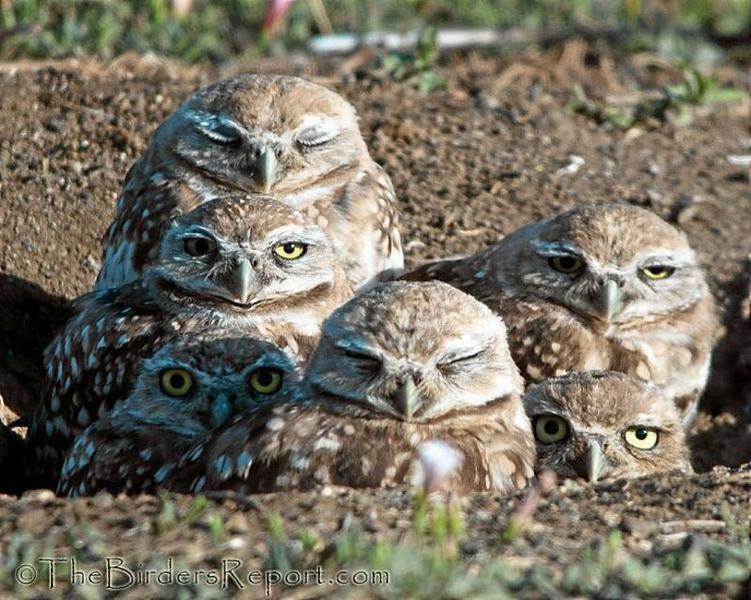 Zoo-ology column: Small burrowing owls attract big ...