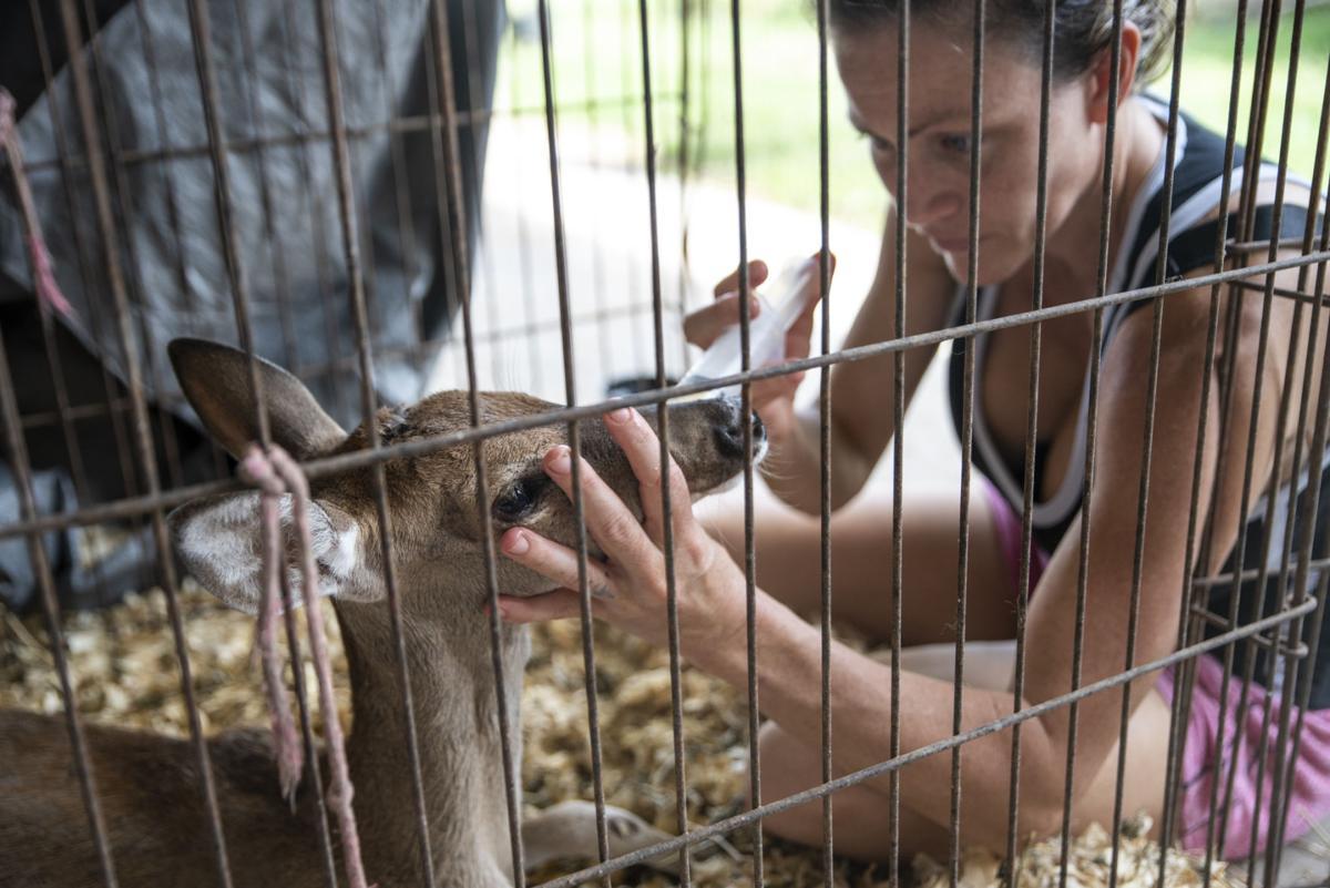Nay Nay's Wildlife Rehabilitation
