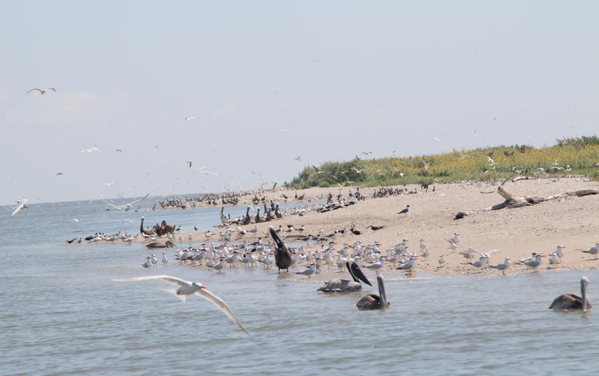 Mild winter causes water birds to nest early
