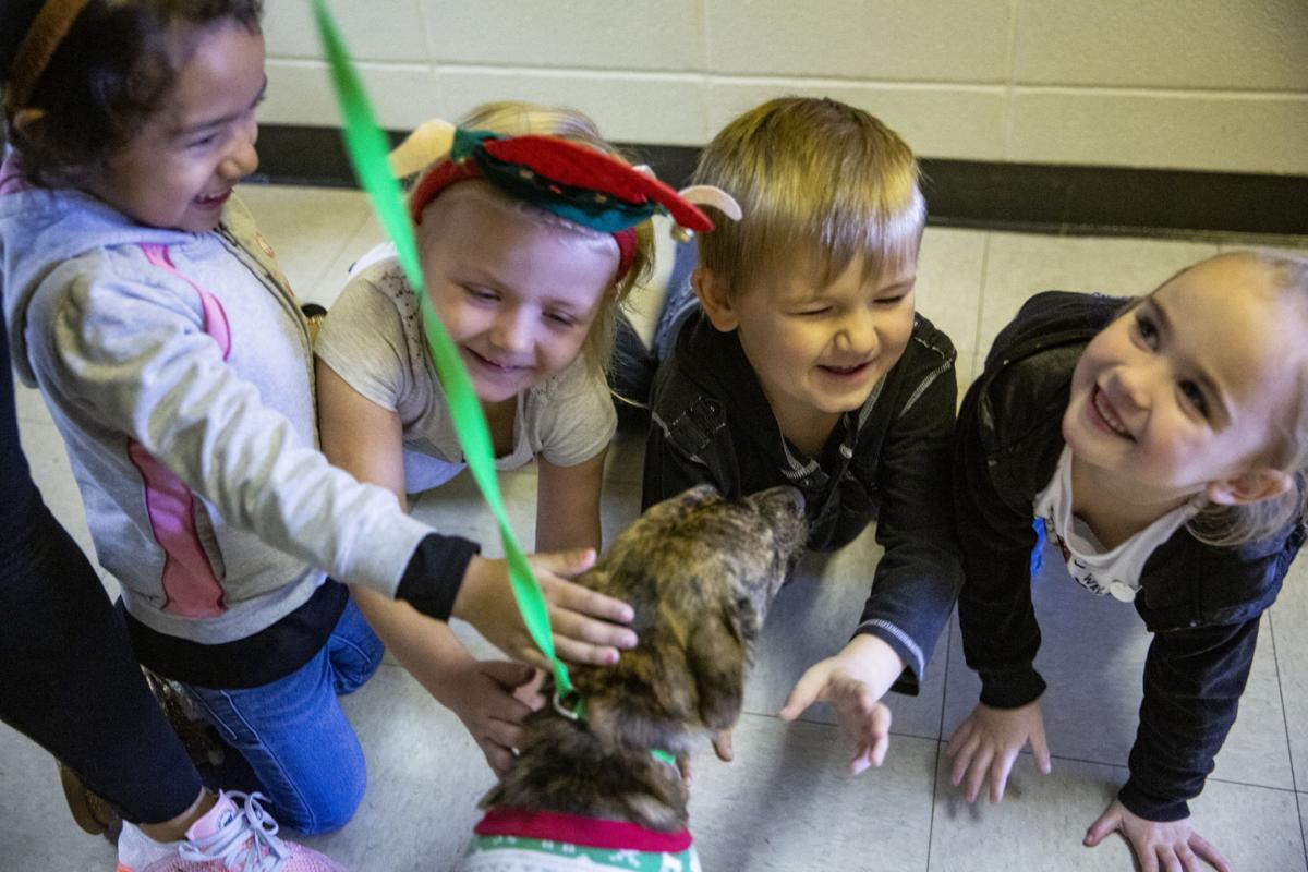 Pet Parade at Aloe Elementary