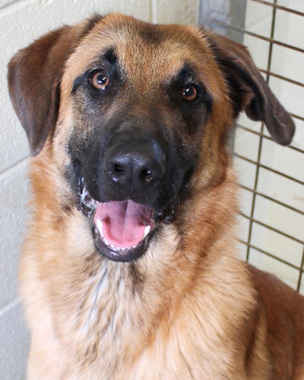 Pets Of The Week April 28 Nonprofits Victoriaadvocate Com