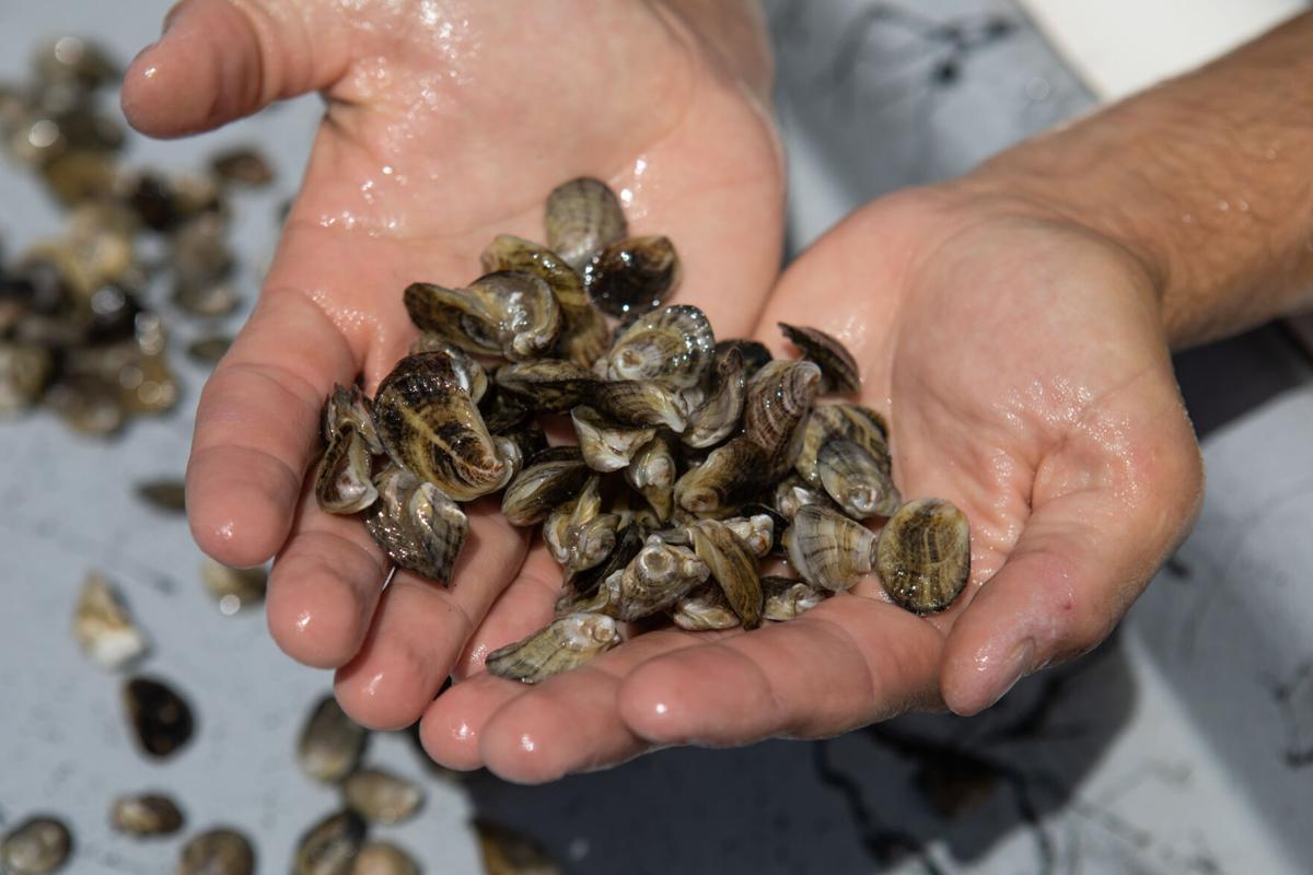 Demonstration oyster farm