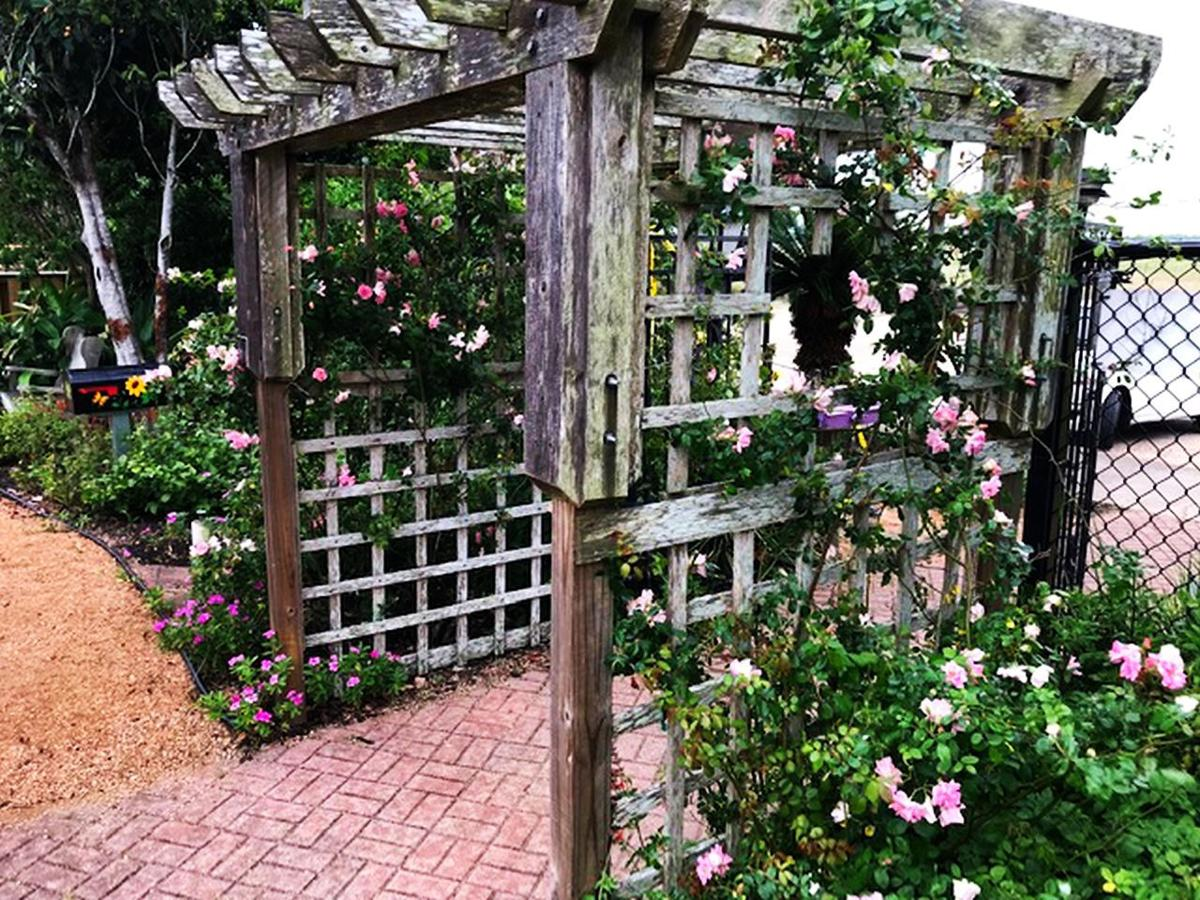 Wooden grid trellis supporting Little Pinkie Climbing Rose