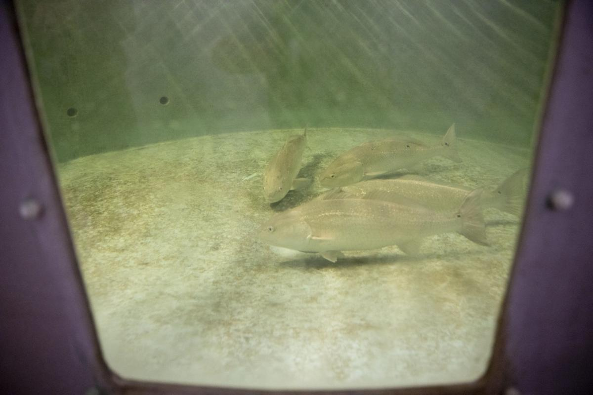 Ekstrom Aquaculture