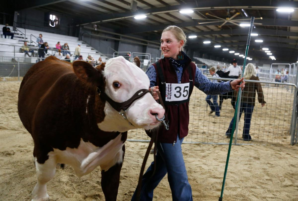 Victoria Livestock Show Day 1