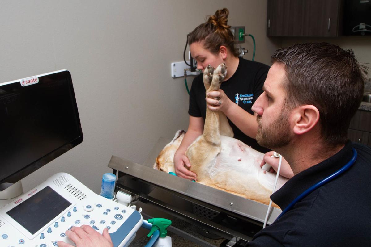 Best Of The Best Crossroads Veterinary Clinic
