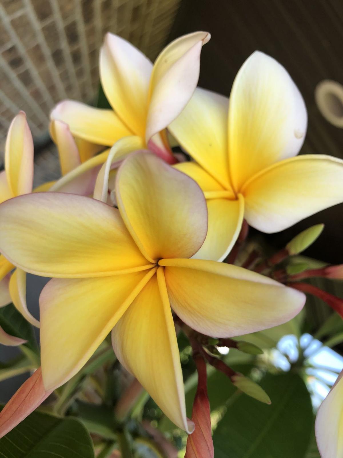 Gardens: Aloha