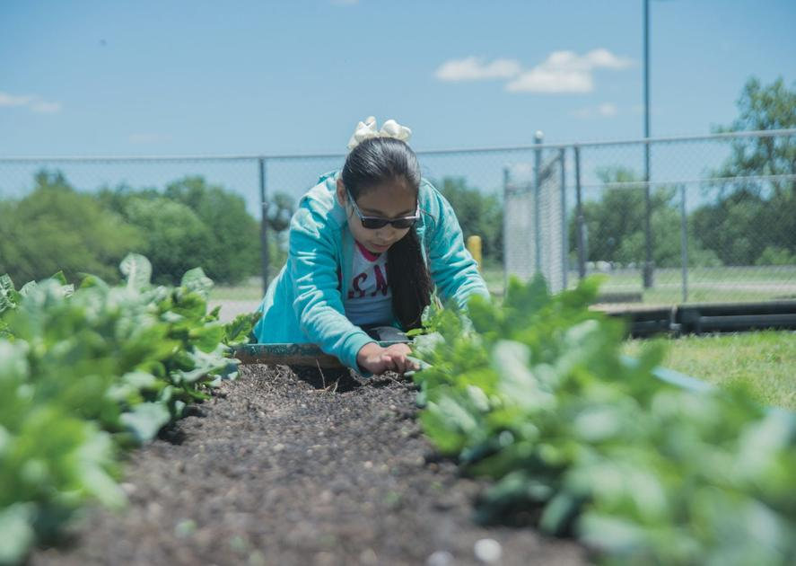 Bloomington pulls out roots of food desert   Health ...