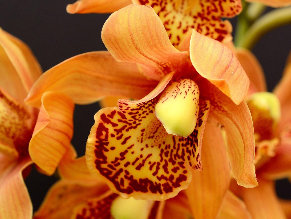 Orchid Care To Keep Them Alive Well Home And Garden