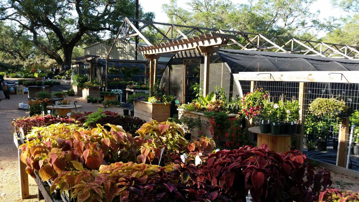 Gardeners Dirt Local Nursery Owner Has Lifelong Love Of Plants