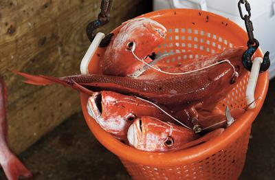 Federal red snapper season to close on Aug. 3
