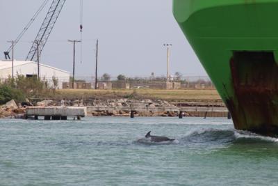 Texas Zoo wild dolphin project