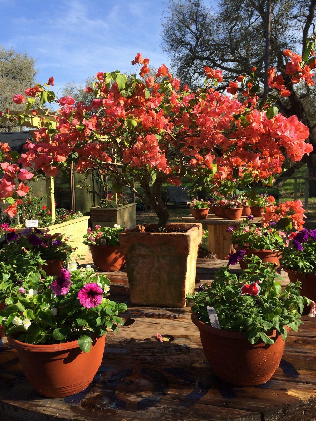 Gardeners\' Dirt: Local nursery owner has lifelong love of plants ...