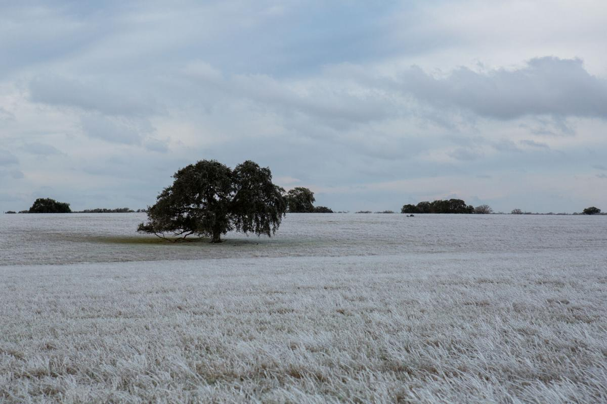Winter storm in Goliad