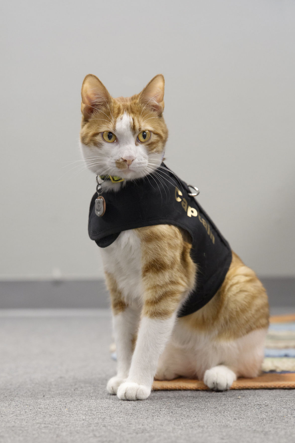 Cat patrols Port Lavaca Police Department