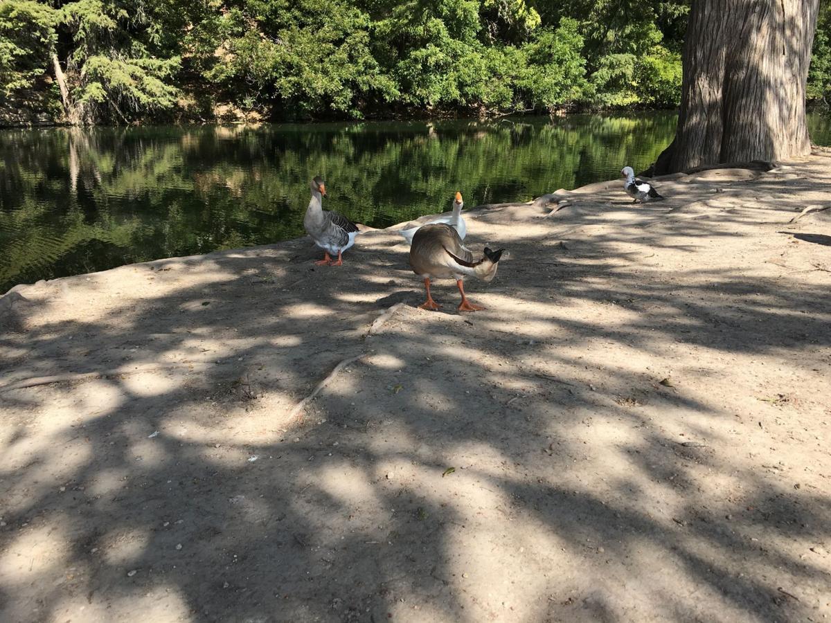 Goose brigade
