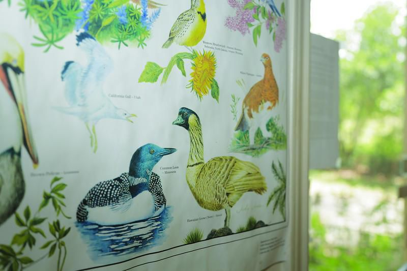 Residents reconnect with nature at Matagorda County birding center (video)