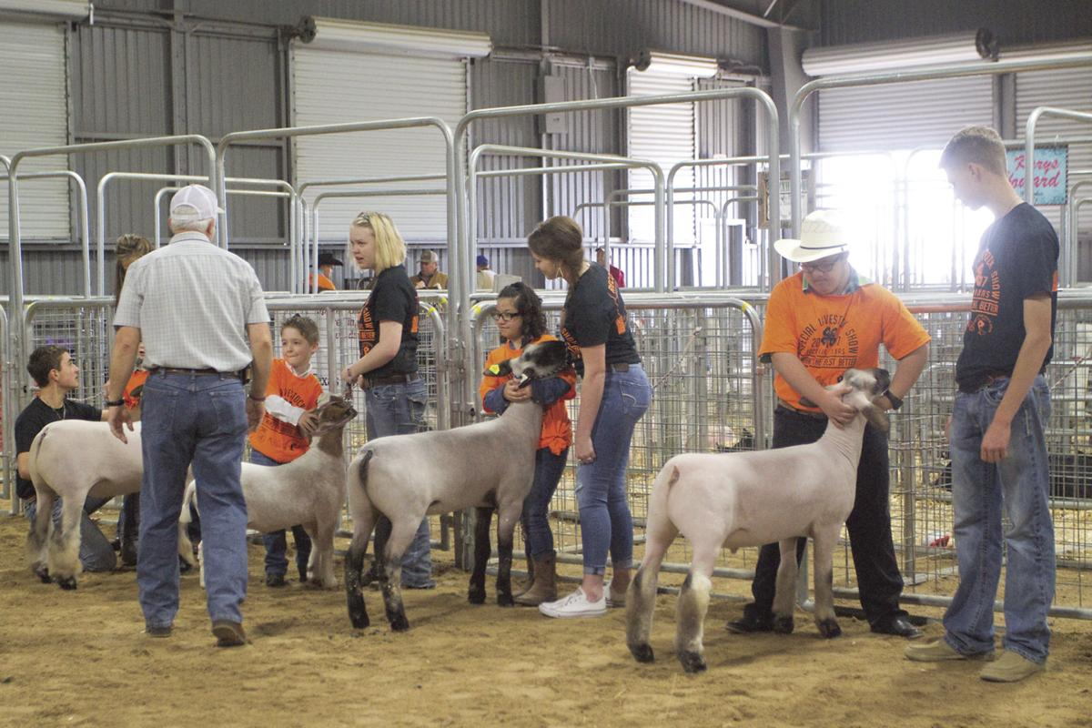 Extra Special Livestock Show gives more responsibility