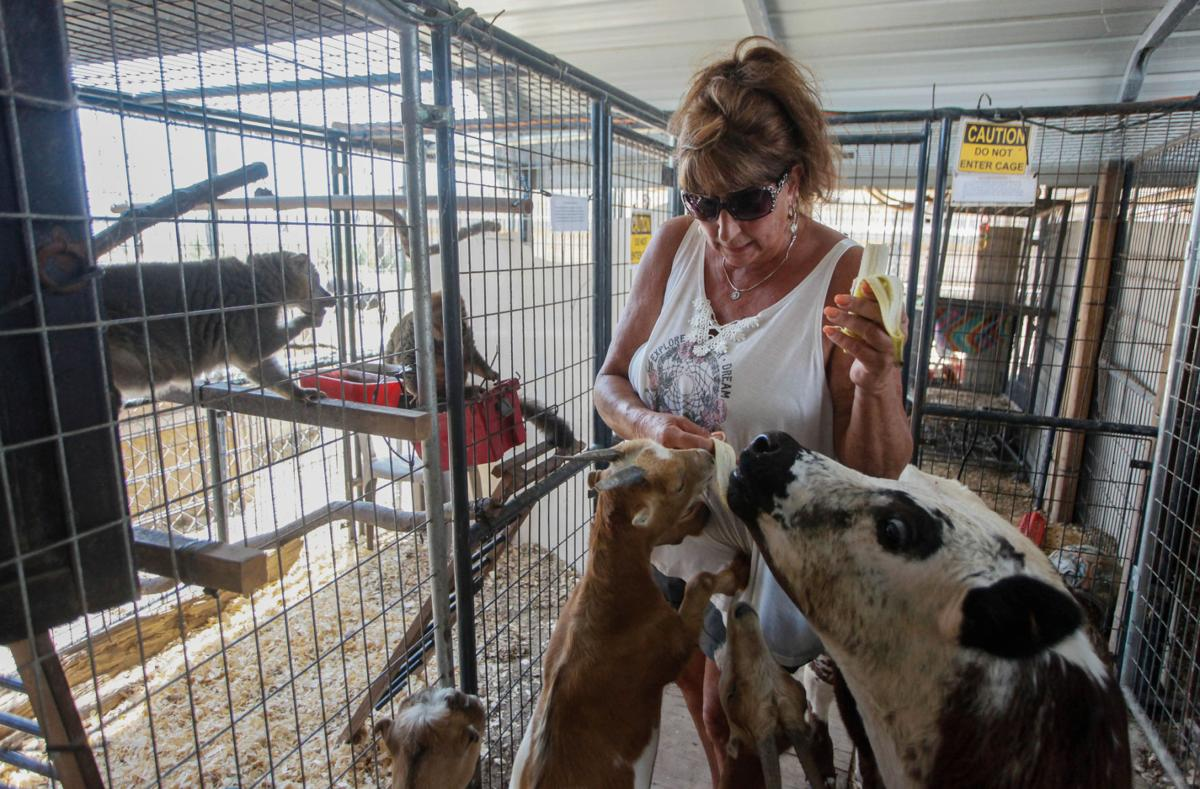Kritter Korral showcases exotic animals to the public