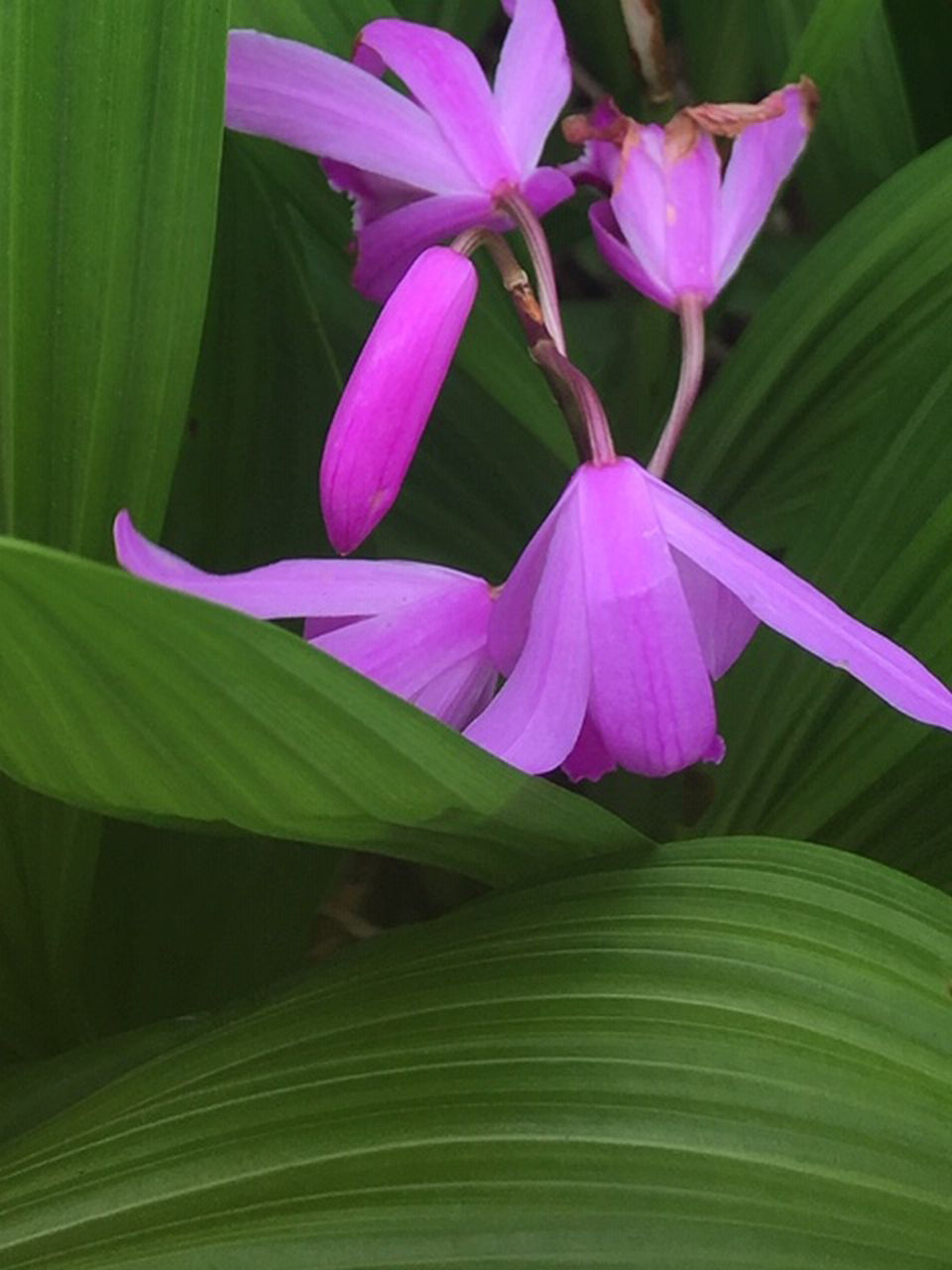 Growing Orchids In The Ground Home And Garden Victoriaadvocate Com