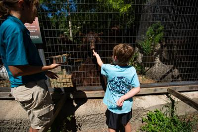 Volunteers to support Texas Zoo for LyondellBasell Global Care Day