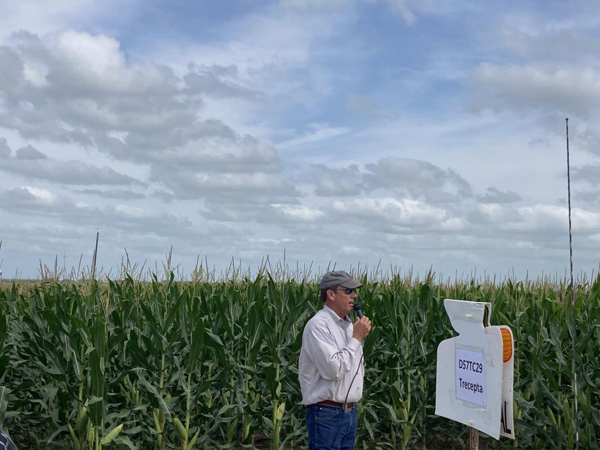 DeWitt County crop tour