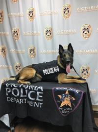 c328fc5073de For Victoria police K-9 and handler, love is secret weapon | Crime ...
