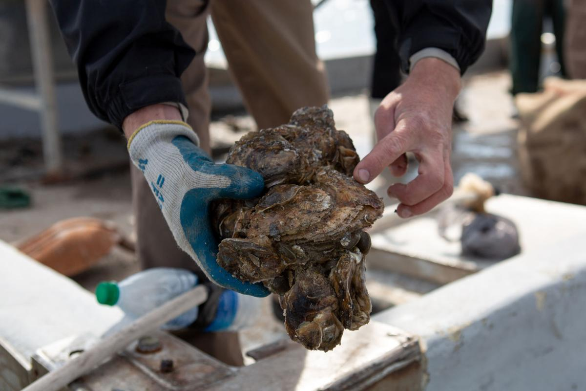 Oyster Season Opening Day