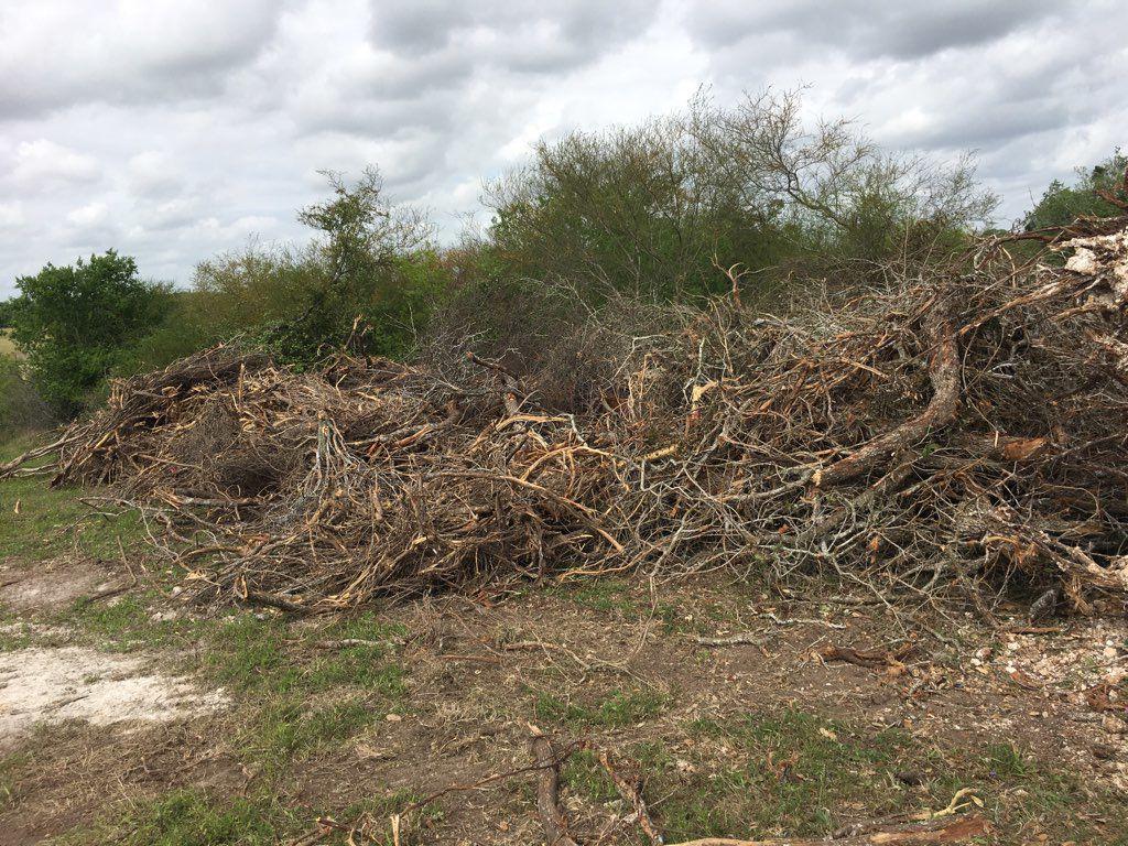 Centuries old oak tree destroyed