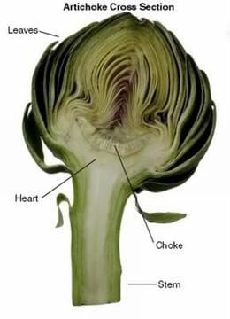 Artichoke An Edible Thistle Full Of Vitamins Home And Garden Victoriaadvocate Com