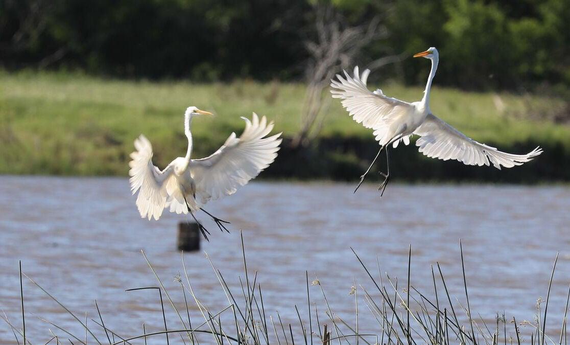 River Clicks Photo Contest