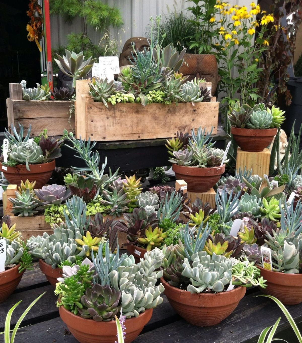 Do It Yourself Garden: Do-it-yourself Succulent Displays