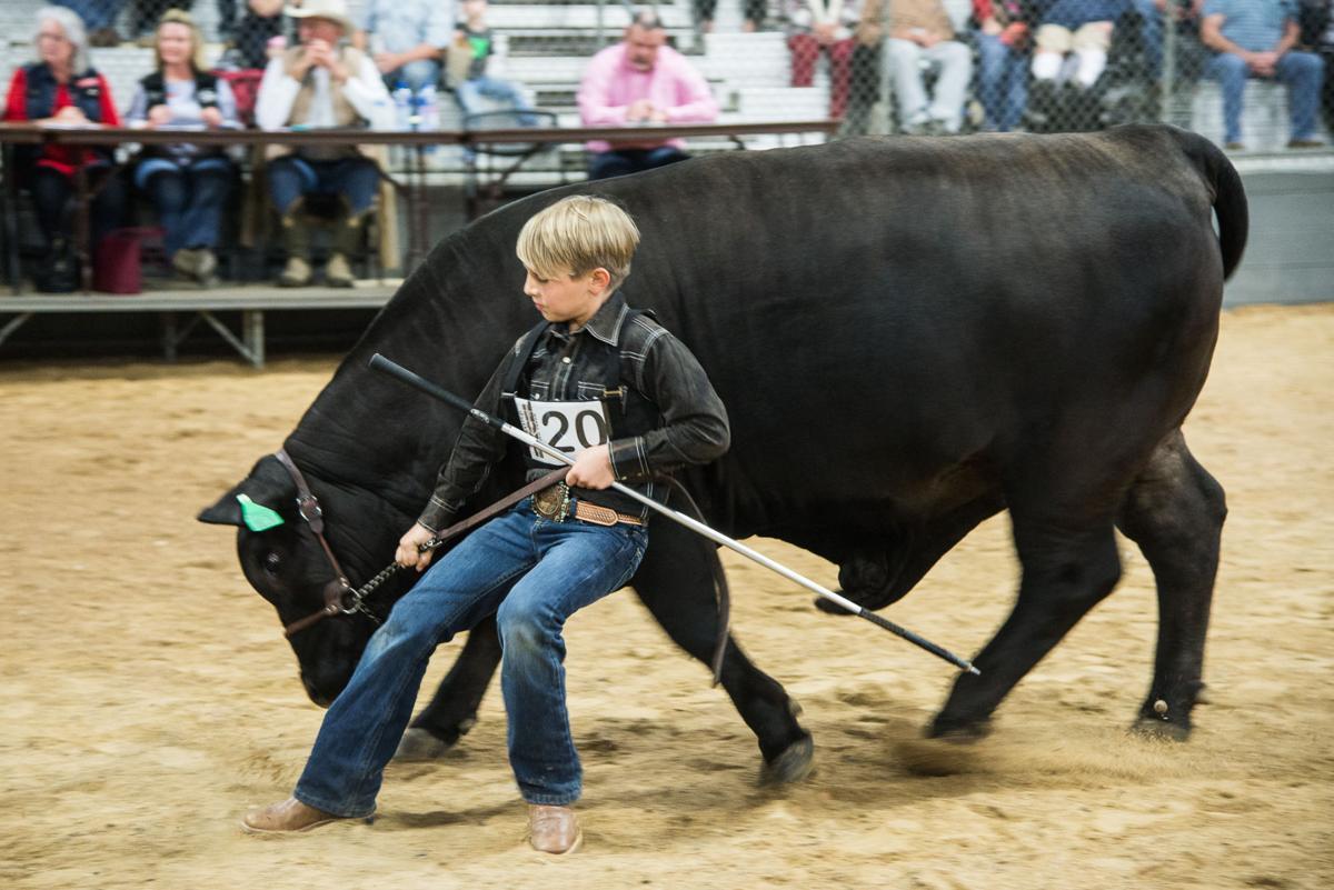 030418_vad_news_steers-2.jpg