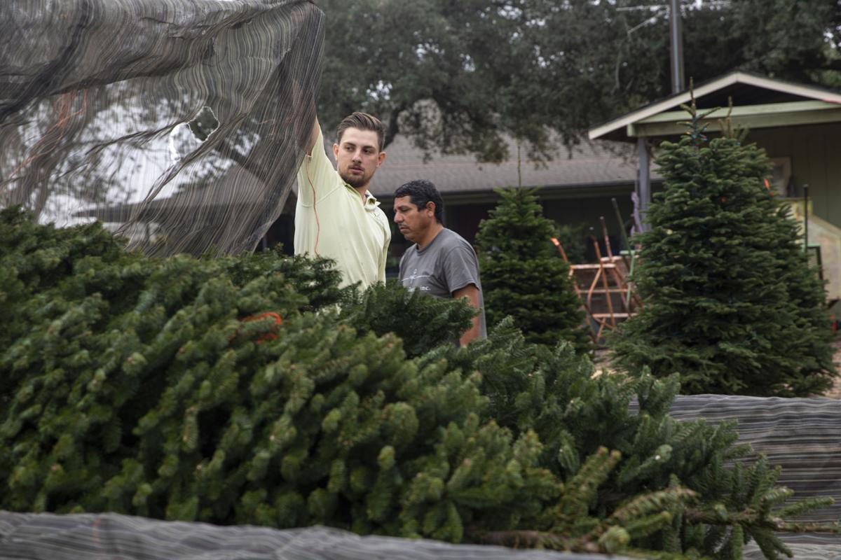 Renken's Nursery Christmas trees