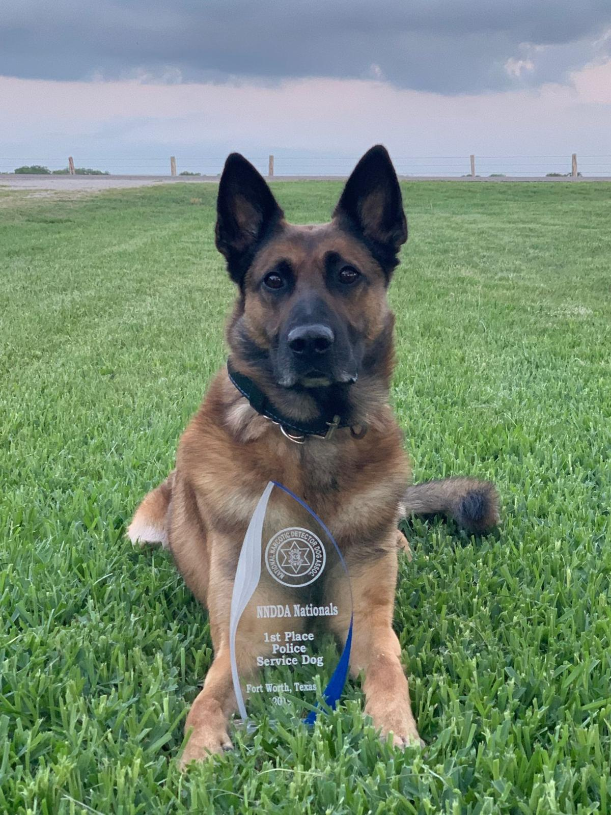 e38325024bfe For Victoria police K-9 and handler, love is secret weapon | Crime & Courts  | victoriaadvocate.com