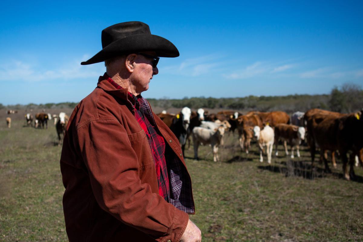 Cuero Cattle Ranchers