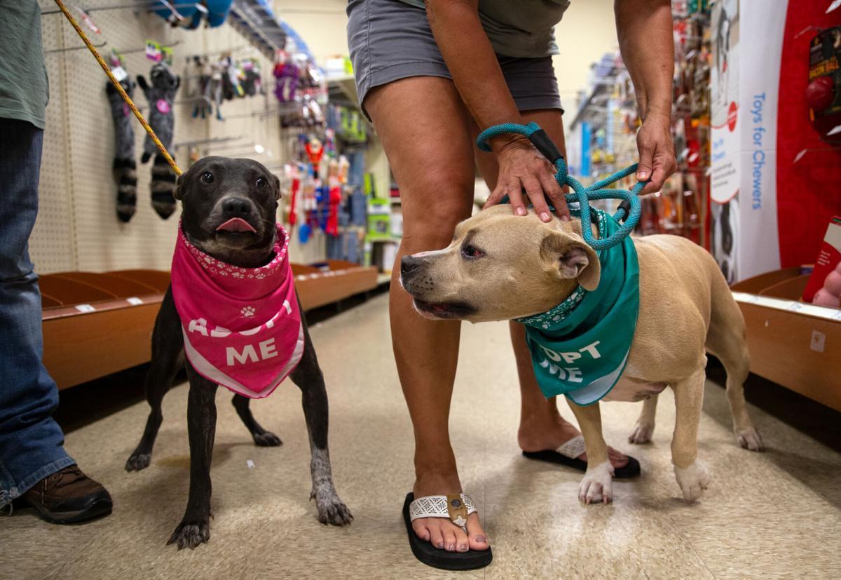 National Pet Adoption Week