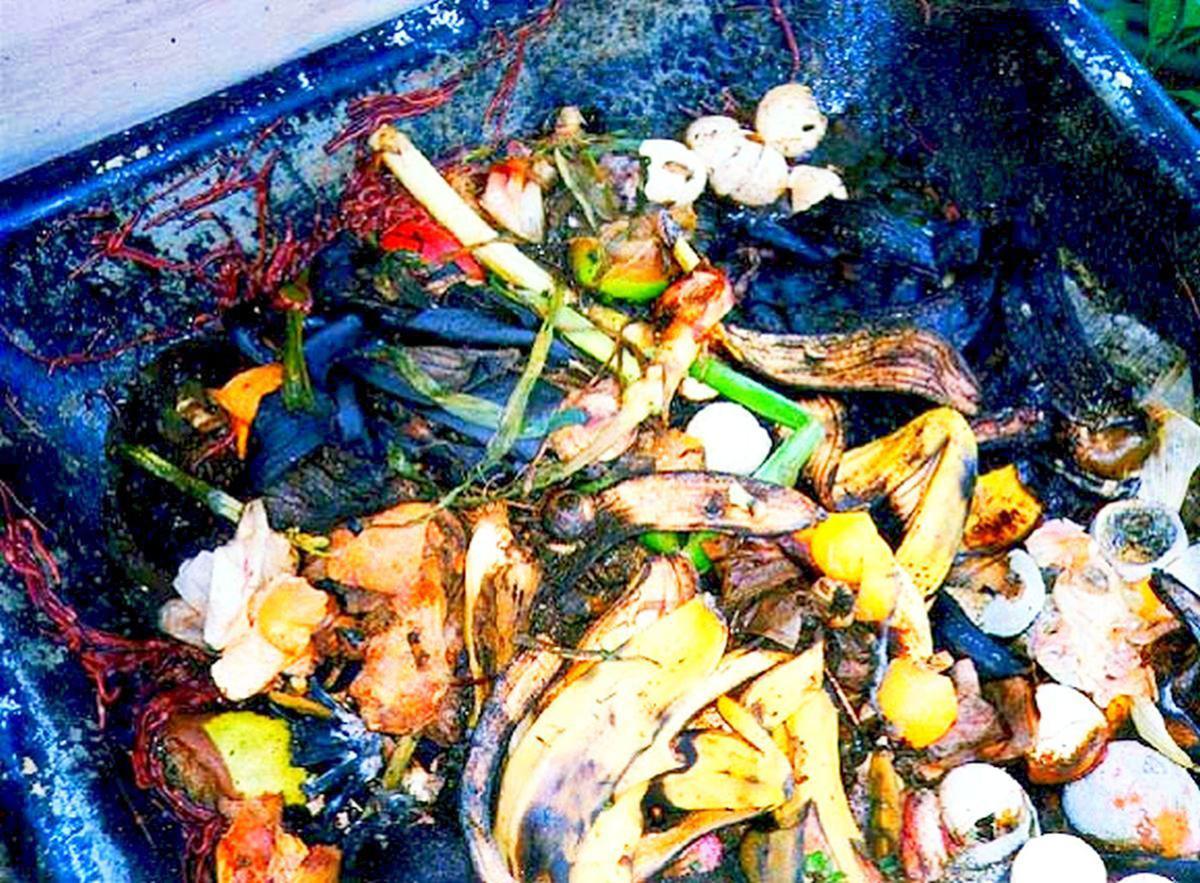 Organic material in bin