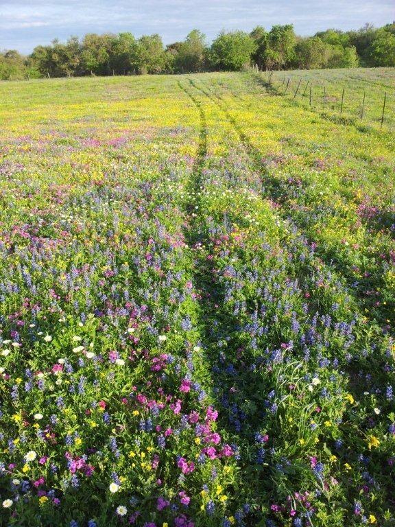 Wildflowers 2021: Sarco