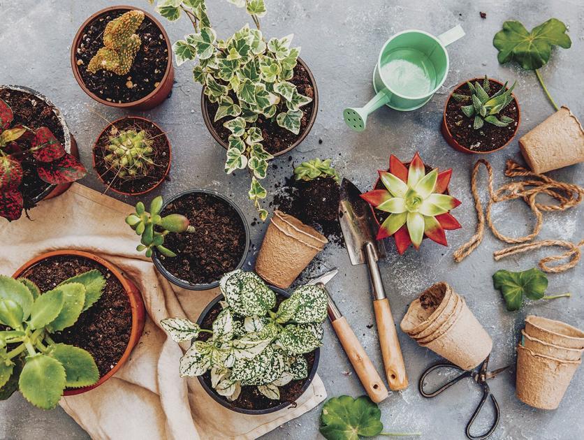 Cuero to host Plant Swap