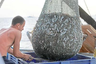 Shrimp season devastated by freshwater