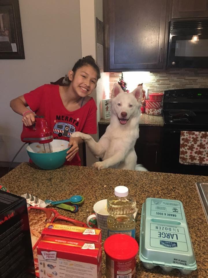 Owner-dog selfies: Watching my mom cook
