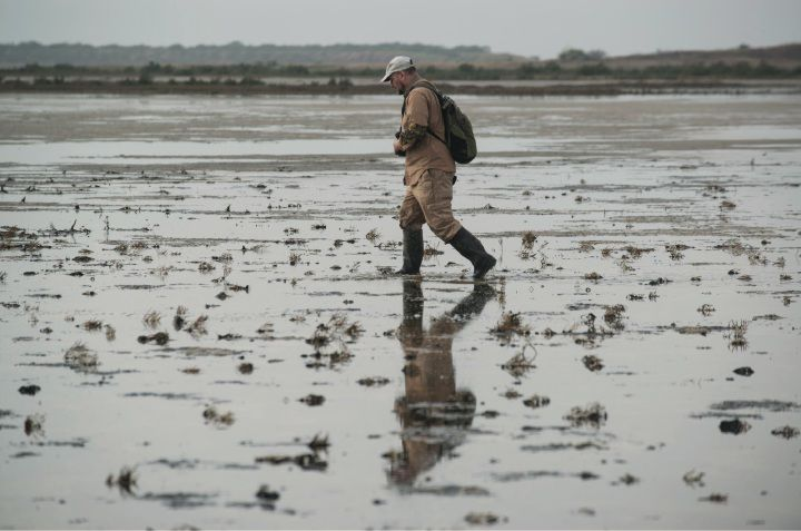 After hurricane, fewer birds found during annual count
