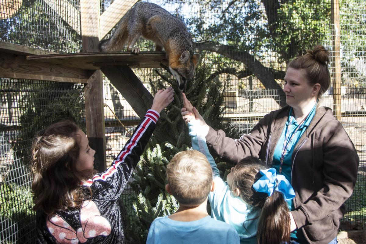 Texas Zoo camp