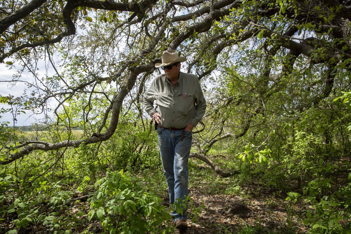 Nursery rancher fights to save centuries old Oak Tree threatened by pipeline expansion