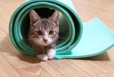 Kitten sitting on a yoga mat.