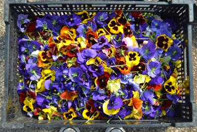 ISU Horticulture Center to offer pick-up, delivery plant sale